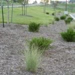 landscaping_web